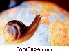 snail on a globe Stock photo