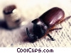 Stock photo  of a beetle