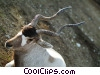 Stock photo  of an Antelope