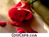 Stock photo  of a roses