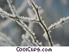 winter scene with tree branch Stock photo