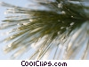 winter scene with pine needles Stock photo