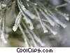 Stock photo  of a winter scene with pine needles