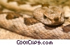 Stock photo  of a rattle snake