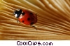 Stock photo  of a ladybug