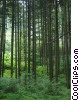Stock photo  of a Forests