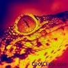Close-Up Alligator face Stock photo
