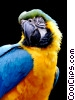 Stock photo  of a Blue and Gold Macaw Parrot