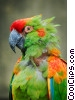 Red-fronted Macaw Stock photo