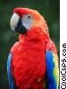 Stock photo  of a Bright Macaw Parrot