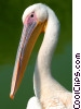 Stock photo  of a Stork