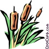 Vector Clip Art graphic  of a Bulrushes