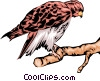 Eagle Vector Clipart picture