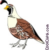Vector Clip Art image  of a California Quail