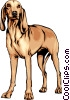 Vector Clip Art graphic  of a Italian hound