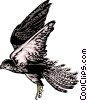 Vector Clipart picture  of a Hawk
