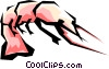 Shrimp Vector Clipart picture