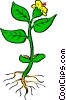 Vector Clip Art graphic  of a Plant with roots
