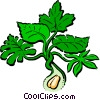 Vector Clipart illustration  of a Peanut plant