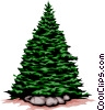Evergreen tree Vector Clipart picture