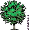 Vector Clipart graphic  of a Tree