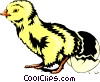 Vector Clip Art image  of a Chick