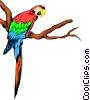 Parrots Vector Clipart picture