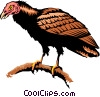 Turkey vulture Vector Clip Art image
