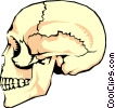 The human skull Vector Clip Art graphic