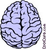 Vector Clip Art image  of a The human brain