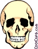 Vector Clipart graphic  of a Human skull