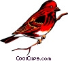 Purple Finch Vector Clipart graphic