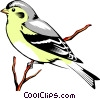 Eastern Goldfinch Vector Clipart illustration