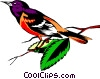 Oriole Vector Clipart illustration