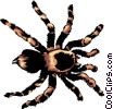 Vector Clip Art graphic  of a Tarantula