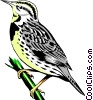 Western Meadowlark Vector Clip Art picture