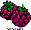 Blackberries Vector Clipart image