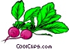 Vector Clip Art picture  of a two Radishes