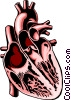 Vector Clip Art graphic  of a Cross section of the heart