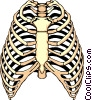 Vector Clipart picture  of a Rib Cage