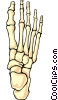 Vector Clipart graphic  of a Human Foot