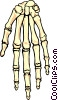 Human Skeletal Hand Vector Clipart illustration