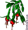 Vector Clip Art graphic  of a Bleeding-heart flower