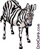 Vector Clipart graphic  of a Zebra