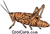Vector Clipart graphic  of a Grasshopper