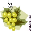 Vector Clipart picture  of a Grapes