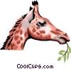 Vector Clipart image  of a Giraffe