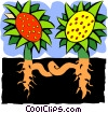 Vector Clip Art image  of a sunflower and roots - abstract