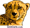 Vector Clip Art image  of a cheetah