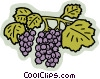 grapes Vector Clipart illustration